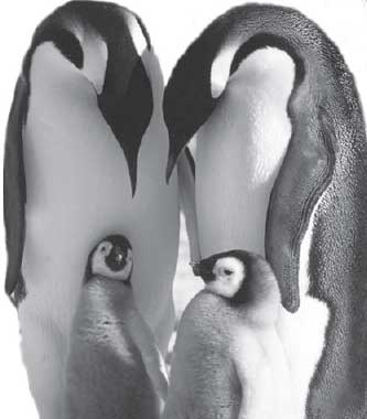 March of the Penguins, Morgan Freeeman, global warming, Gurdjieff, Fourth Way